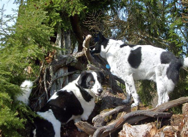 snoopy and shadow climbingstumps